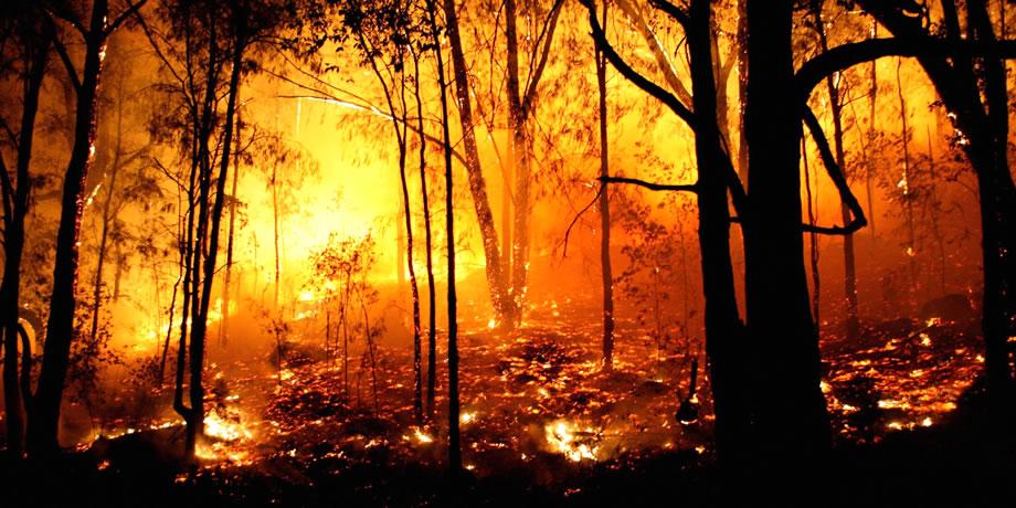 自然 発火 ユーカリ